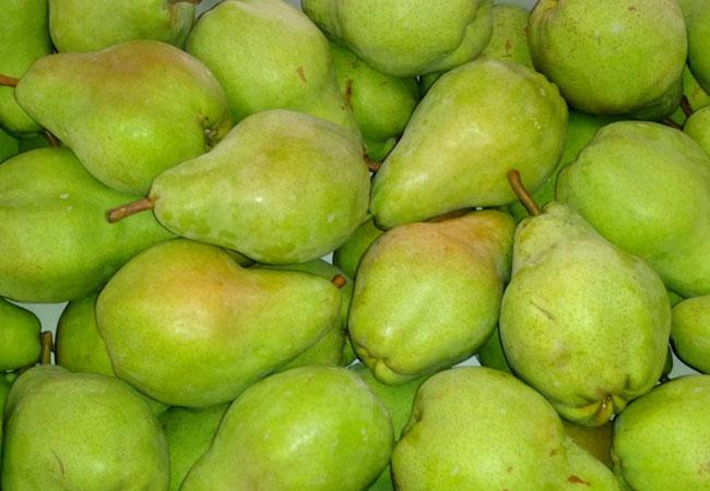 Alejandrina Pear